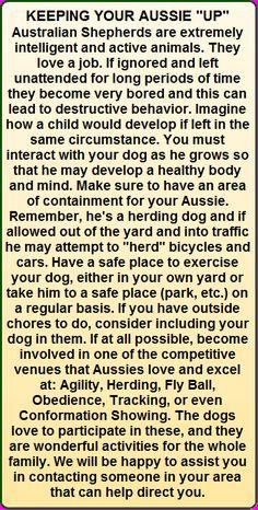 Australian Shepherd Training Tips