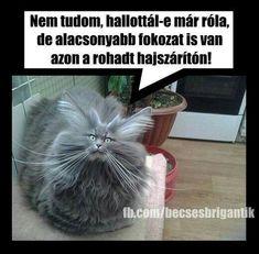 Haha, Funny Pictures, Cute Animals, Jokes, Wallpapers, Fanny Pics, Pretty Animals, Husky Jokes, Ha Ha