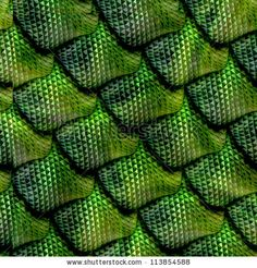 close up replitle scales- this image shows the tiny details that make up each indivdual scale. The shape of each scale is also quite interesting as it is slightly curved and raised. this is enhnaced by the darker green shades and the very light tones of green.