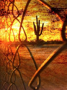 A saguaro cactus is seen from through a fence at sunset in Arizona.