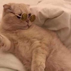 tu querer compartir icons tu venir a etiquetar # De Todo # amreading # books # wattpad Baby Cats, Baby Animals, Cute Animals, Cute Cats And Dogs, I Love Cats, Cat Couple, Cat Icon, Cute Cat Wallpaper, Memes Funny Faces