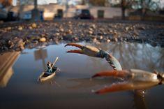The Wonderful Miniature Photography World of Kurt Moses