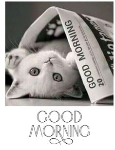 Cute Good Morning Images, Good Morning Wishes, Good Day Quotes, Good Morning Quotes, Kittens Cutest, Cats And Kittens, Line Friends, Black Wallpaper, Happy Saturday