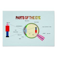 =>quality product          Education, Science, Parts of the eye Poster           Education, Science, Parts of the eye Poster Yes I can say you are on right site we just collected best shopping store that haveThis Deals          Education, Science, Parts of the eye Poster lowest price Fast S...Cleck Hot Deals >>> http://www.zazzle.com/education_science_parts_of_the_eye_poster-228401727700545806?rf=238627982471231924&zbar=1&tc=terrest