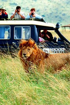 go to africa and go on a safari. out of everything, this is what i want to do most. i will do this before i die!