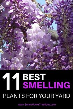 11 best smelling plants for your yard. If you want a fragrant backyard, these flowering plants are the best ones to add into your landscape. #gardening #flowers