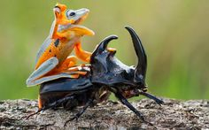 The 9 most incredible nature images of the week | Sciencedump