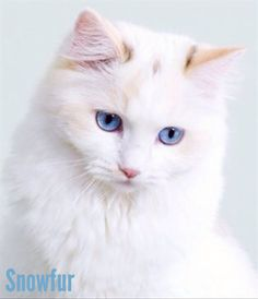 Snowfur: Bluestar's sister and died when hit by a Monster and is mother of Whitestorm. She's only found in Bluestar's Prophecy.