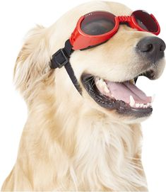 87e1717191 7 Best Dog goggles images