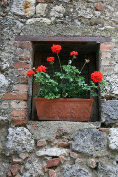 Red Geraniums in Terra Cotta Planter in Brick and Stone Niche, Monteriggioni, Italy