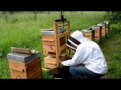 TÉMOIGNAGES - l'apiculture naturelle en ruche Warré - rucher école Villa le Bosquet - YouTube