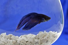 Fish can get depressed, just like you, and that could make them a good model organism for studying depression in people.