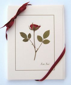 Rose Card Gift Set of 4 real pressed roses by PatsysPressedFlowers, $12.00