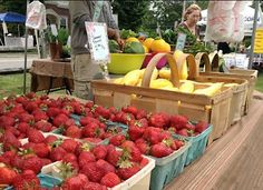 Fresh and local veggies and fruits are just a few of the tempting treats you'll find at the Bass River Farmers Market. Stuff To Do, Things To Do, Shop Till You Drop, Cape Cod, Farmers Market, New England, Watermelon, Veggies, Tours