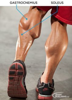 Bodybuilding.com - Raising Calves: Preston Noble's Training Plan For Freaky Lower Legs ★ Find more at http://www.pinterest.com/competing/