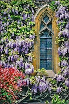 wisteria and stained glass window by Muni Paula