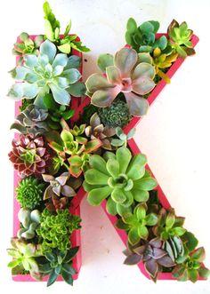 etsyfeaturedshop-rootedinsucculents-plants-008