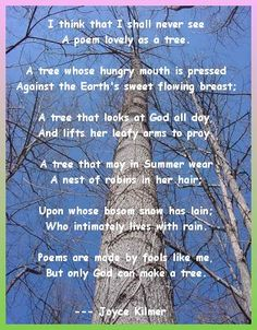 """I think that I shall never see a poem lovely as a tree"" - Joyce Kilmer • photo source not found"