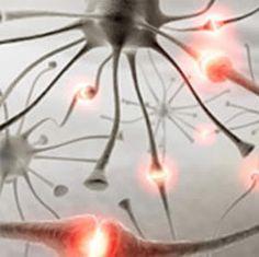 Earn a PhD in Neuropsychoimmunology