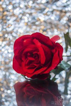 Single Rose, Bokeh, Red Roses, Hd Wallpaper, Friendship, Lady, School, Projects, Plants