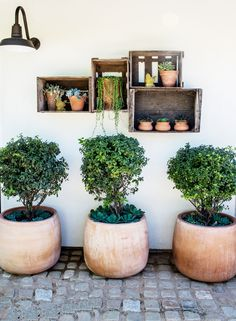 Small potted plants in built-in shelves in backyard and small potted trees