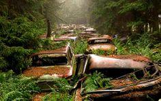 Zabytkowe auta – a raczej cmentarz samochodów – w Chatillon (Belgia).  -> Power of nature!