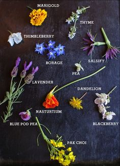 Edible Flowers (Halls of Nienna : Photo)