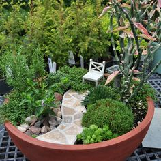 These are fabulous - I've got to make one this summer! Bush Gardens  Several 'bushes' line the stone path to a tea time arm chair. Sit here to watch the birds as they frolic in the Hubert frog birdbath. Plants include cuphea, Dianthus, Armeria, Nierembergia, Saxifraga paniculata, thyme. Devil's Backbone, adds a unique accent to the garden.