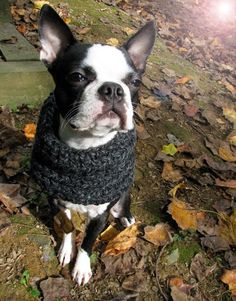 If you give a dog a cowl: Free crochet pattern | Habitual Homebody