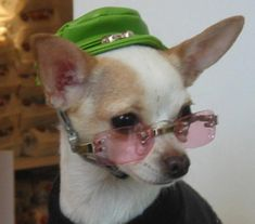 DUKE y complementos para mascotas | Pet Pride | Puppia | Malucchi ...