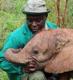 The David Sheldrick Wildlife Trust Animals For Kids, Animals And Pets, Baby Animals, Cute Animals, Baby Elephants, Adopt An Elephant, Elephant Love, Elephant Walk, African Elephant