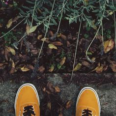 Fall weather sneakers