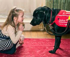 All dogs know at least one trick. It is time to show the world by accepting the Trick for a Treat challenge in aid of Medical Detection Dogs. Prince Harry Wedding, Dog Charities, Royal Life, Duchess Of Cornwall, Service Dogs, Duchess Kate, Challenges, Medical, Prince William