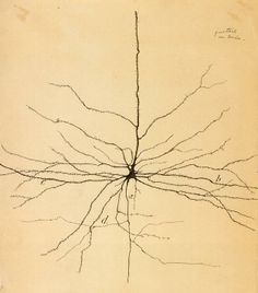 Early drawing of a neuron by Santiago Ramón y Cajal (1852-1934), copy now owned by Sheldon.