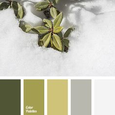 almost white color, color of concrete, color of stone, dark green color, dark grey color, dark khaki color, gray color, green color