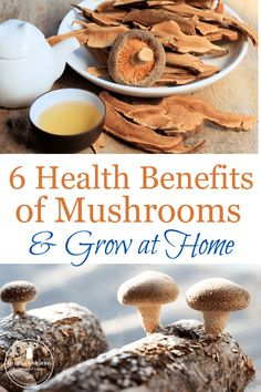 Learn the health benefits of mushrooms and how to easily grow them at home!