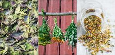 6 Easy Ways To Dry Fresh Herbs To Enjoy All Year Round Of all the different types of foods and ways to preserve them, from pickling and curing to freezing or canning fruits and vegetables, ma.