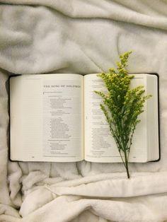 @kamplainnn ❃ bible study photography His word