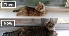 10+ Before-And-After Photos Of Cats Growing Up | Bored Panda