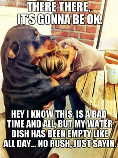 Dog's always know how to console their owners...