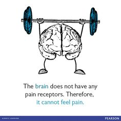 Did you know the brain does not have any pain receptors? It cannot feel pain!