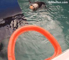 Otter Plays Basketball Gif