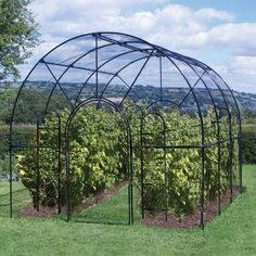 Roman Fruit Cage agriframes.co.uk deliverable to usa