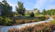 Penn Terrace, Duke University, with Reed Hilderbrand, photo by Mark Hough
