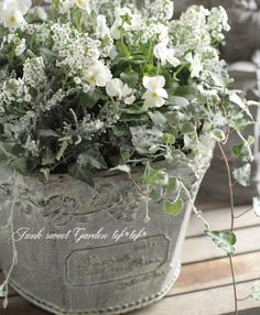 Junk sweet Garden tef * tef *- Junk sweet Garden tef*tef* tef * tef * group * *White X & # mas planting - All Flowers, Green Flowers, Beautiful Flowers, Container Plants, Container Gardening, Outside Decorations, Moon Garden, Deco Floral, Small Space Gardening