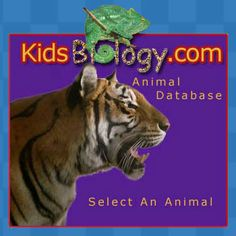 Great website for kids to research animals!