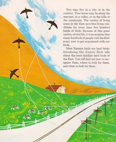Introducing Our Eastern Birds by Matthew F. Vessel and Herbert H. Wong, illustrated by Ron King (1970).
