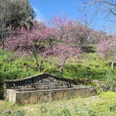 #Pollina #madonie aria di primavera