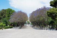 Zapion, Athens. Aten. Greece. Grekland.