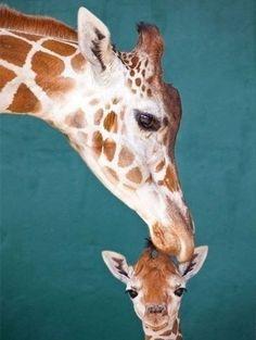 animals mothers | #giraffe #cute #animals #love #mother